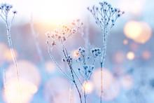 Frozen Twigs In Hoarfrost Gli...