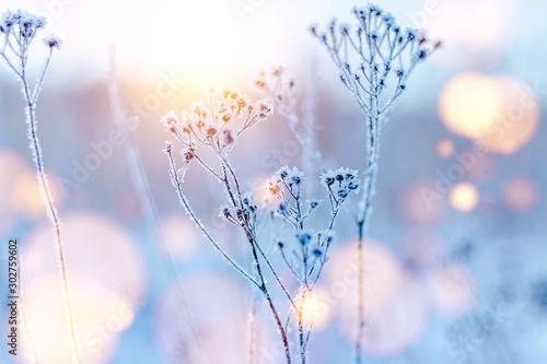 frozen twigs in hoarfrost glisten in the sun. winter landscape with sun flare