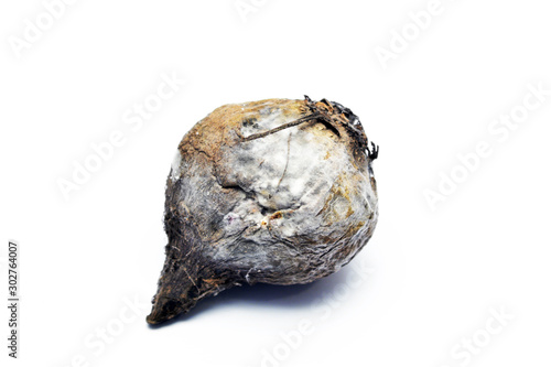 Valokuva  Beet covered with mold isolated on white background