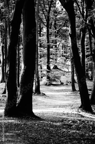 Obraz Wald - fototapety do salonu