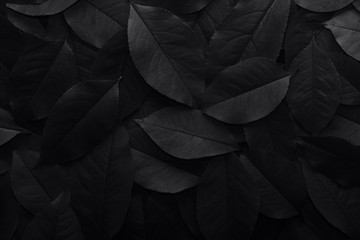 Black background. Background from autumn fallen leaves closeup. Black and white photo.