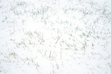 Snow Covered Meadow In Earlier...