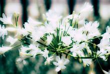 Closeup Of Colorful Flower Blo...