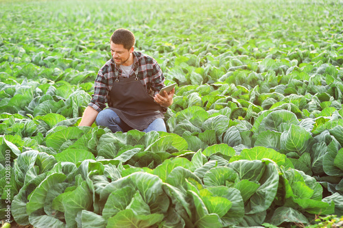 Fototapeta Male agricultural engineer working in field obraz