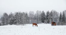 A Group Of Horses In A Winter Paddock Field