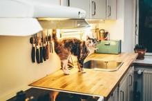 Cute Gray Cat In The Kitchen L...