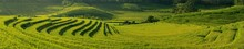Rice Terrace Panoramic Banner ...