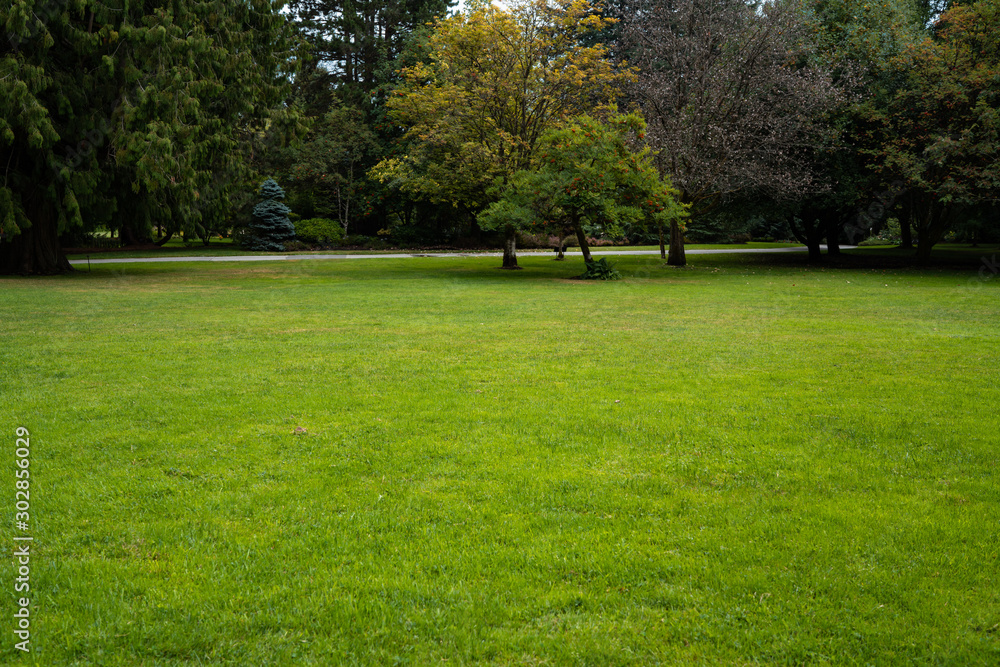 Fototapety, obrazy: Beautiful trees and green grass in the garden. lawn in the garden.