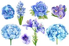 Set Of Blue Flowers, Rose, Lily, Hydrangeas, Crocuses,  Eucalyptus, Succulent, Watercolor Illustration