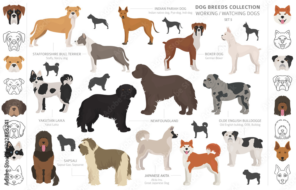 Fototapety, obrazy: Working, service and watching dogs collection isolated on white. Flat style. Different color and country of origin