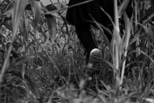 Caminar Y Perderse En El Bosqu...