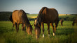 Pferdeharmonie