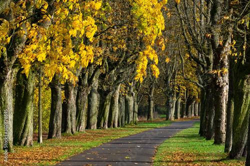Schöne golden farbende Allee für Fußgänger Canvas Print