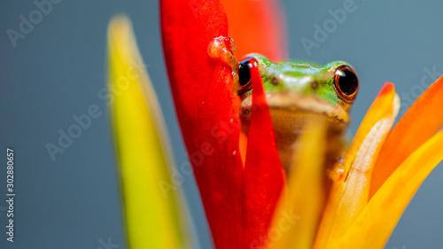 Fotografie, Obraz frog on leaf