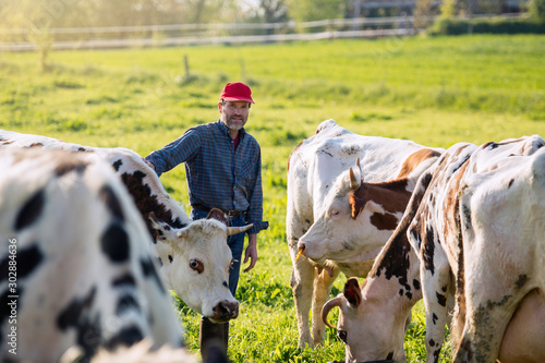 Fotografía Farmer in his field caring for his herd of cows