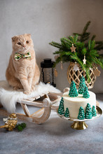 Christmas, New Year Greeting Card. Cute Cat With Bow Tie On The Sledge With Festive Cake, Christmas Tree And Decorations On Gray Background. Confectionery, Bakery Concept. Copy Space