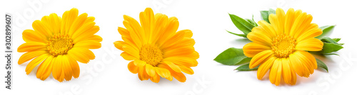 Obraz Calendula. Calendula flower isolated. Marigold on white. - fototapety do salonu
