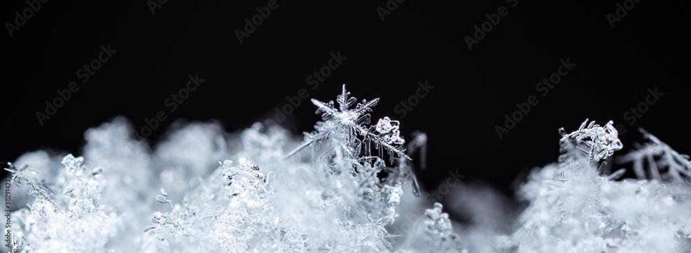 Fototapeta winter photo of snowflakes in the snow