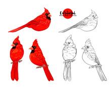 Cardinal Birds - A Symbol Of C...