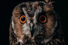 Close Up View Of Wild Owl Muzz...