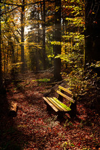 Wooden Bench In Autumn Forest Illuminated By Sun