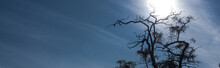 Tree With Dry Branches And Blu...