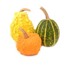 Three Yellow, Orange And Striped Green Ornamental Gourds