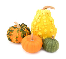 Group Of Five Ornamental Gourds - Orange, Yellow And Green