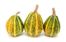 Three Tall Green And Yellow Striped Gourds As Autumn Decoration