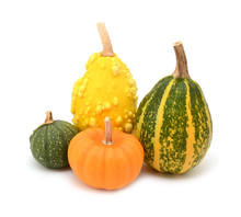 Four Green, Orange And Yellow Ornamental Gourds For Seasonal Decoration