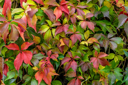 colorful leaves in fall