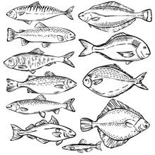 Seafood. Hand Drawn Sketch Ill...