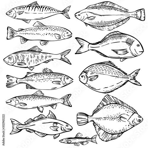 Leinwand Poster Seafood