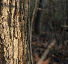 High Stump Of A Broken Tree In...