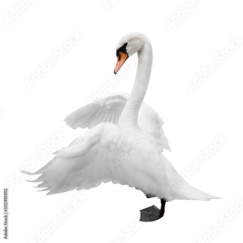 Tuinposter Zwaan Swan isolated on white