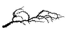 Branch Of Blackthorn. Vector Drawing