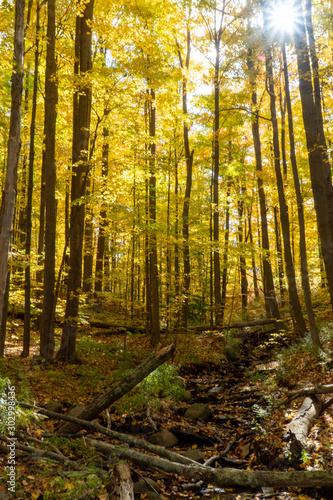 Pennsylvania forest in autumn