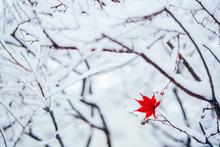 雪ともみじ