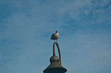 Seagull Lands On Lamp Post