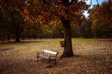 Bench In The Park At Autumn Sunset. Memorial Park Sumarice In Kragujevac, Serbia.