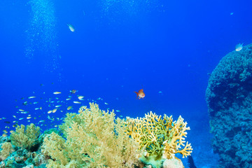 Fototapeta na wymiar Coral Reef at the Red Sea, Egypt