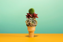 Succulents In Ice Cream Cone O...