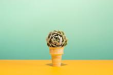 Succulent In Ice Cream Cone On...