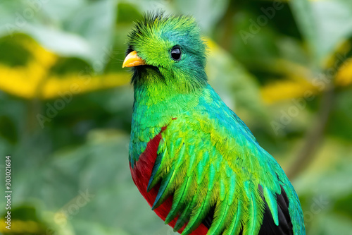 Photo Resplendent Quetzal