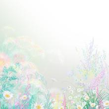 Flowers Dandelion, Cornflower...