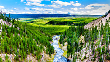 The Gibbon River Downstream Of...