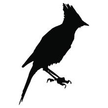 Isolated Vector Illustration. Steller's Jay. North American Bird. (Cyanocitta Stelleri). Black Silhouette On White Background.