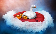 White Goose Laying Golden Eggs In A Fancy Nest