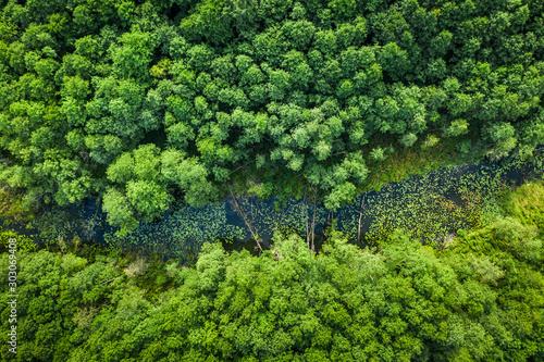 Autocollant pour porte Rivière de la forêt Green forest and river in summer, aerial view