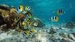 Pacific ocean, French Polynesia, shoal of colorful tropical fish (Pacific double-saddle butterflyfish) underwater in the lagoon of Bora Bora, Oceania